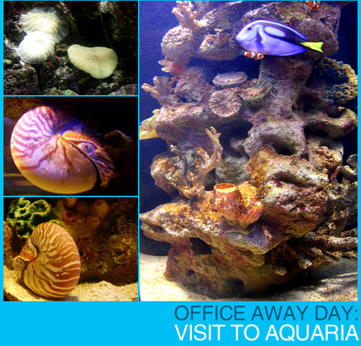 Office Awayday: Visit to Aquaria