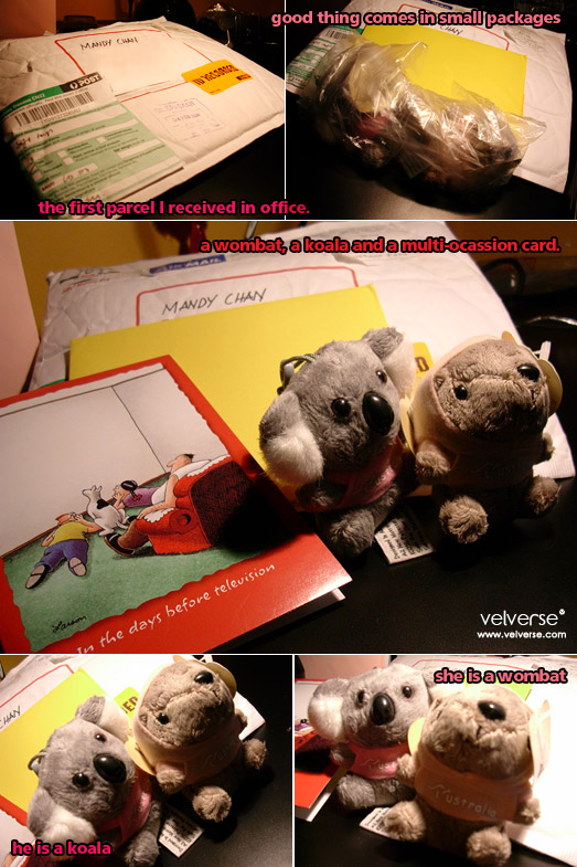 a wombat, a koala and a multi-ocassion card